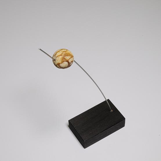 provsticka tiger coral 16mm